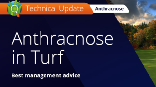 Anthracnose in Turf Webinar by ICL